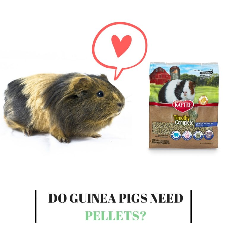 Do Guinea Pigs Need Pellets
