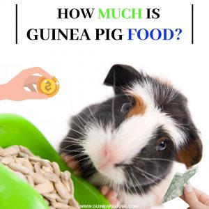How Much Is Guinea Pig Food
