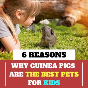 6 Reasons Why Guinea Pigs Are the Best Pets for Kids
