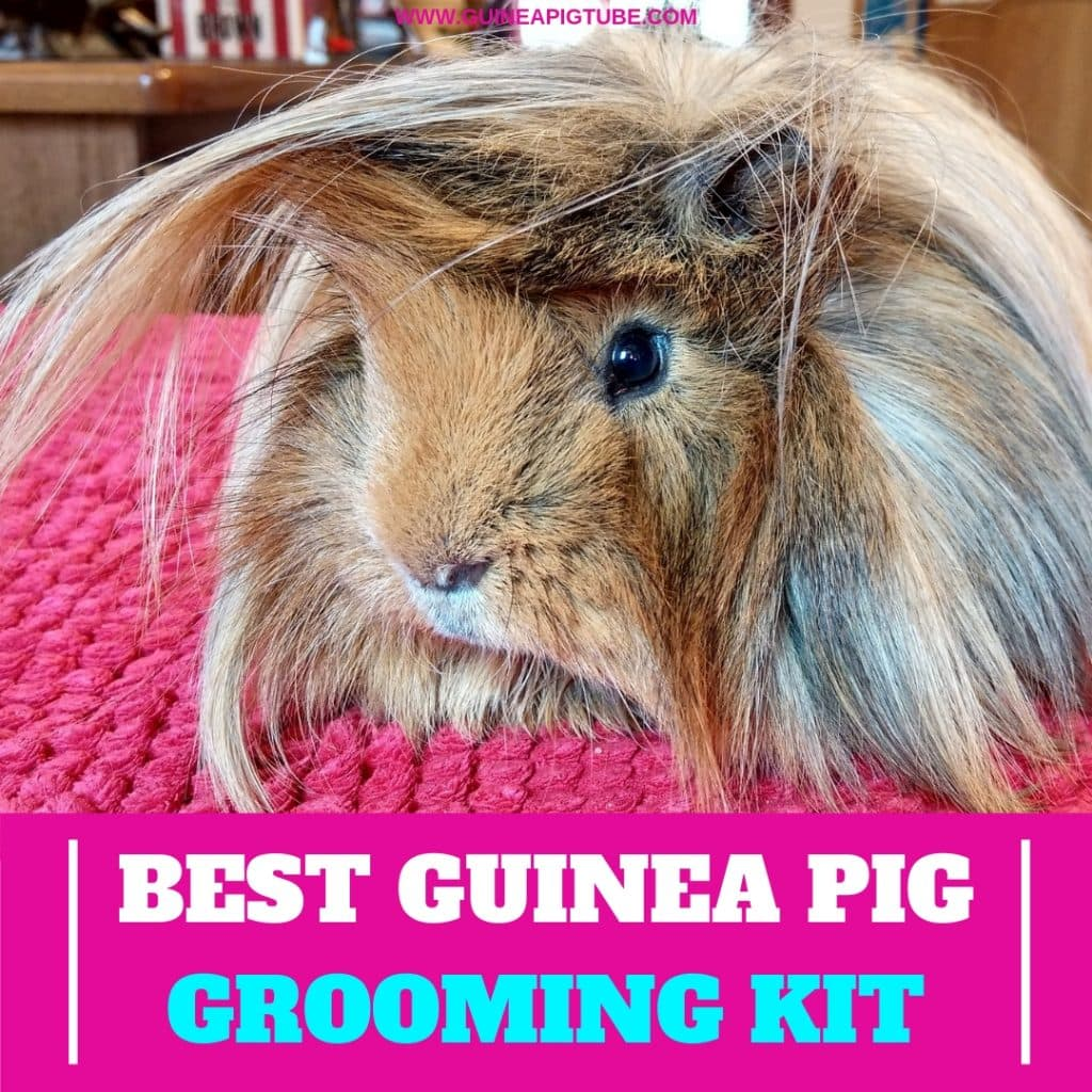 Best Guinea Pig Grooming Kit