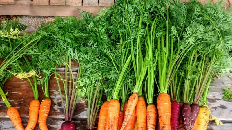 Nutrition Facts of Carrot Tops