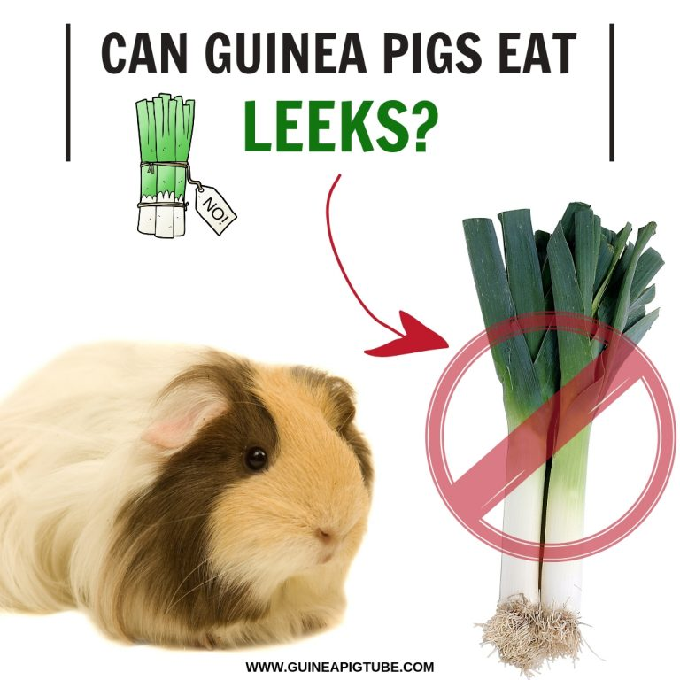 Can Guinea Pigs Eat Leeks