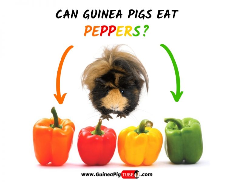Can Guinea Pigs Eat Peppers (Benefits, Risks, Serving Size & More)