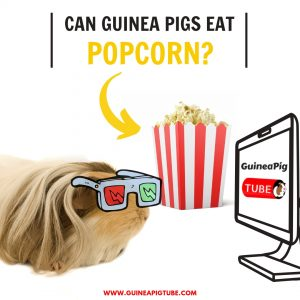Can Guinea Pigs Eat Popcorn