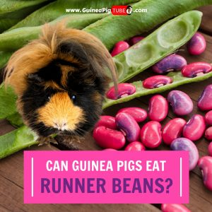 Can Guinea Pigs Eat Runner Beans (Benefits, Risks, Serving Size & More)