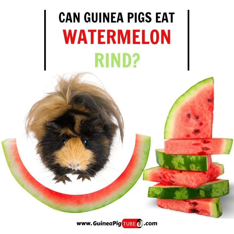 Can Guinea Pigs Eat Watermelon Rind (Benefits, Risks, Serving Size & More)