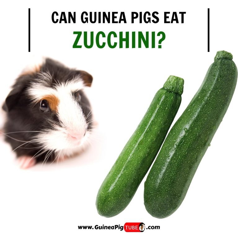 Can Guinea Pigs Eat Zucchini (Benefits, Risks, Serving Size & More)