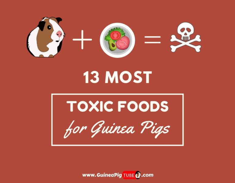 13 Most Toxic Foods for Guinea Pigs...