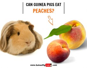 Can Guinea Pigs Eat Peaches? (Benefits, Risks, Serving Size & More)