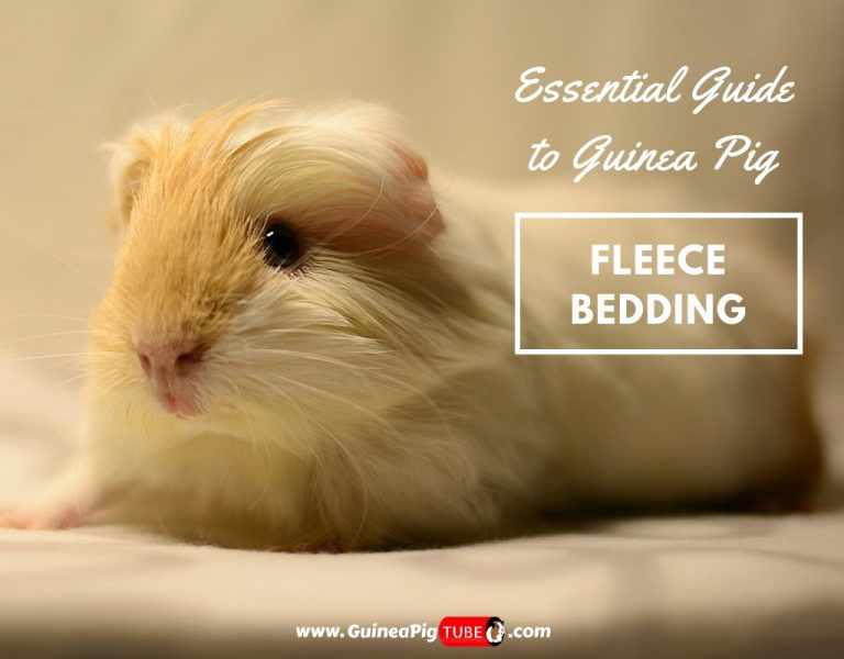 Essential Guide to Guinea Pig Fleece Bedding.