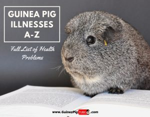 Guinea Pig Illnesses A-Z (Full List of Health Problems)
