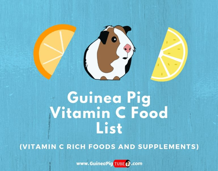 Guinea Pig Vitamin C Food List (Dosage, Serving Size & More)