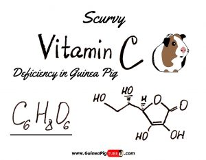 Guinea Pigs Scurvy - Vitamin C Deficiency in Guinea Pig