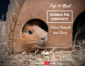 Top 10 Best Guinea Pig Hideouts (TubesTunnels and Caves)