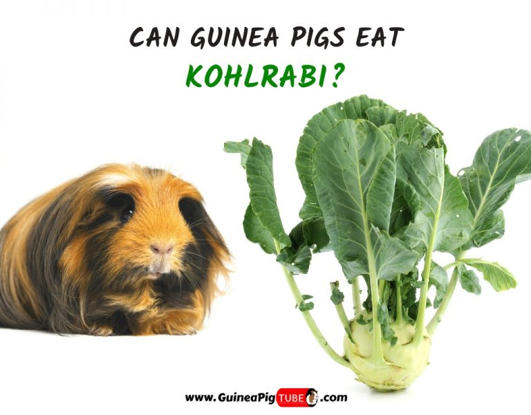 Can Guinea Pigs Eat Kohlrabi (Benefits, Risks, Serving Size & More)
