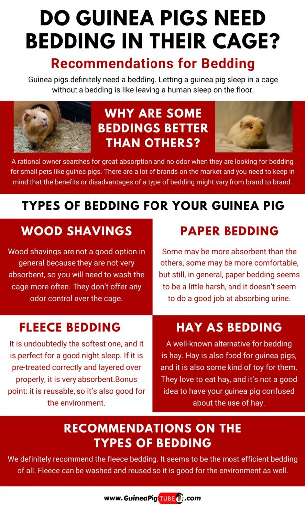 Do Guinea Pigs Need Bedding in Their Cage1