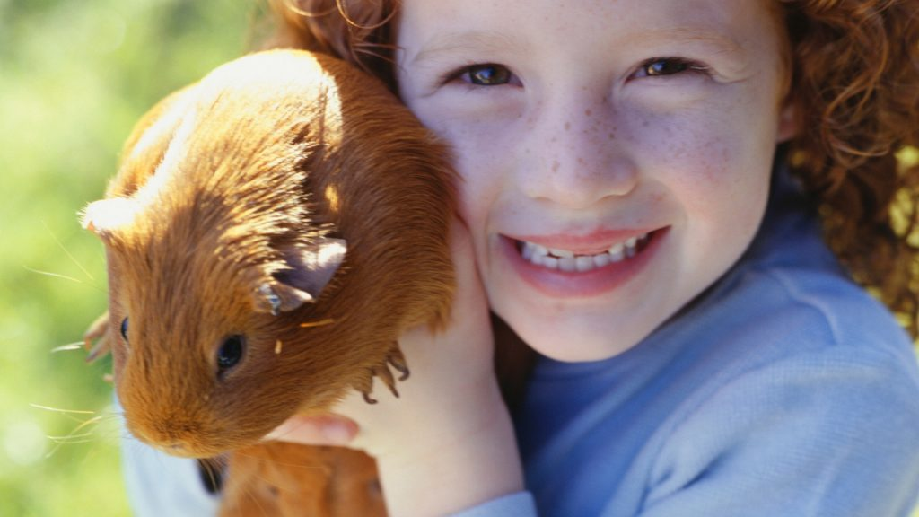 You're Handling the Guinea Pig the Wrong Way