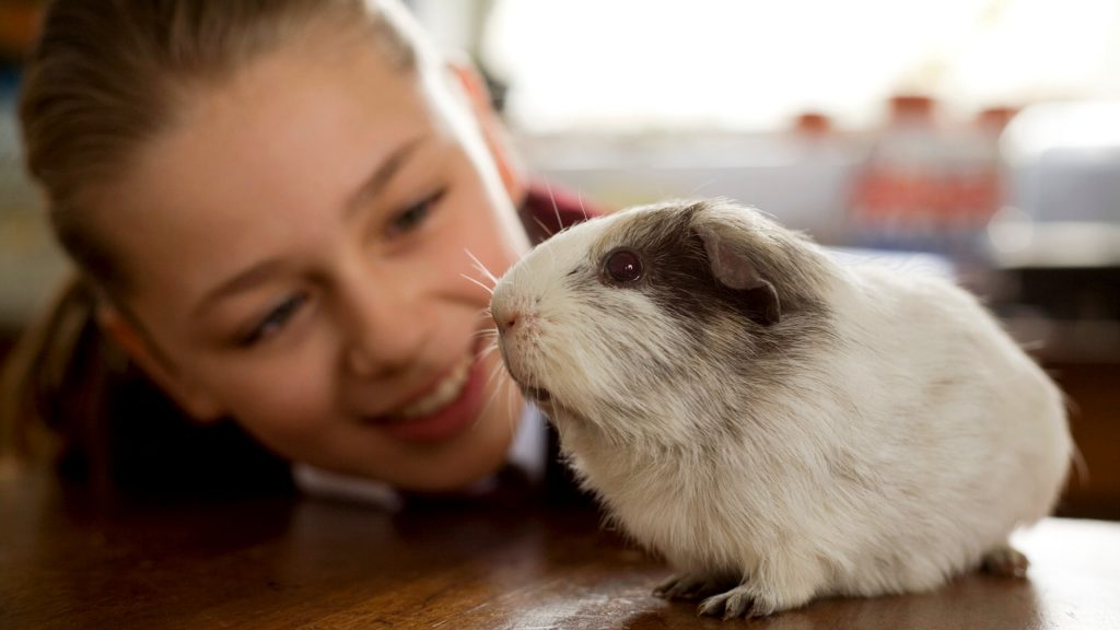 guinea pigs like Getting Attention