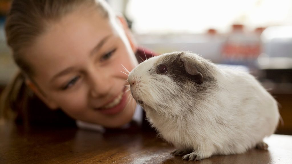 Why is Guinea Pig Training Important