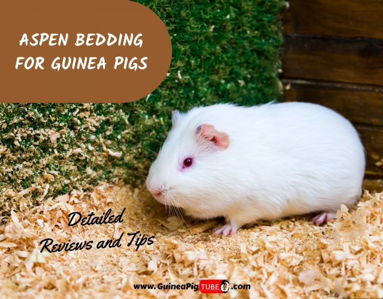 Aspen Bedding For Guinea Pigs