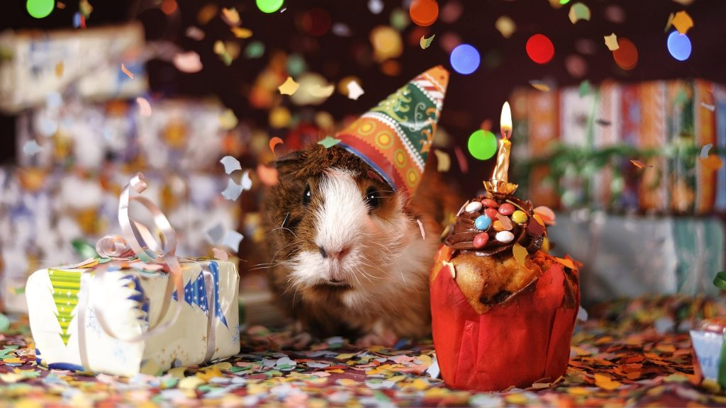 How Many Years Can a Guinea Pig Live