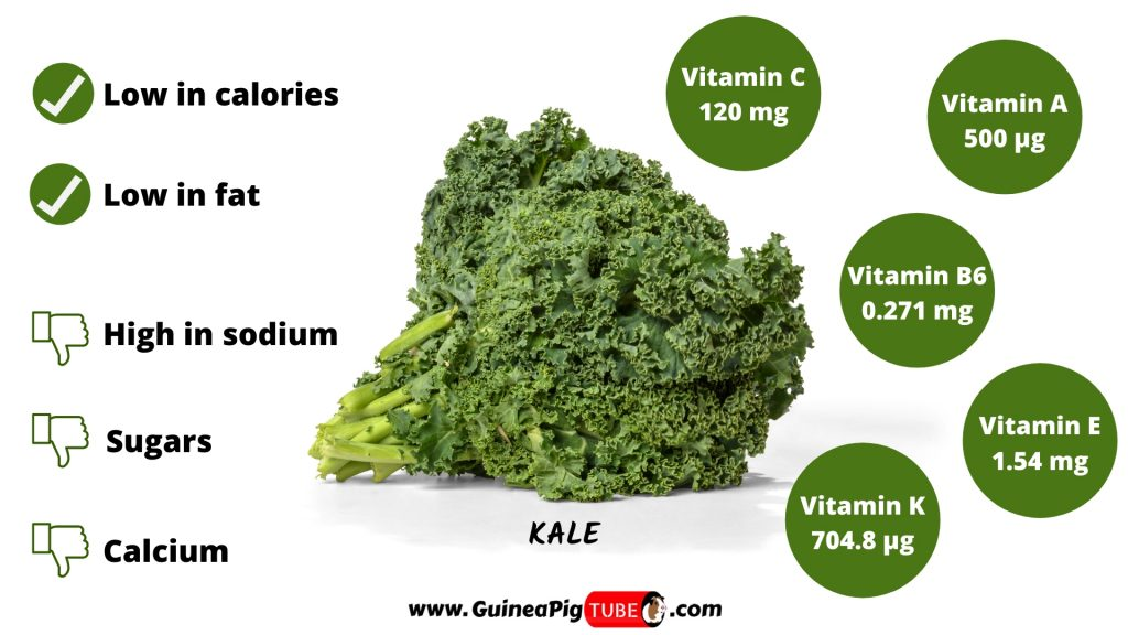 Kale and Guinea Pigs