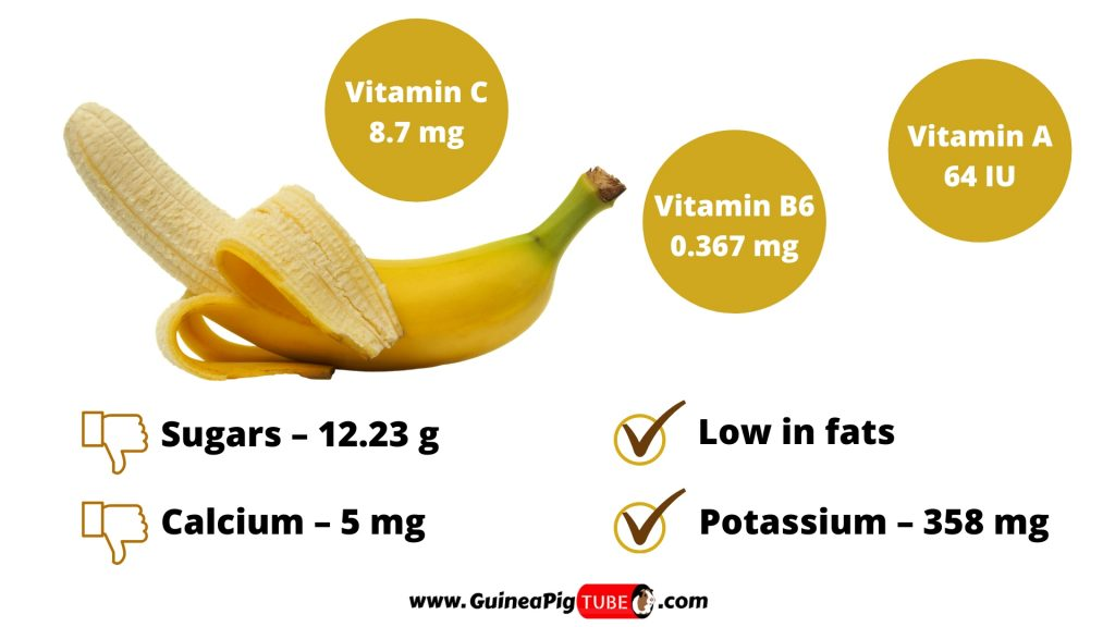 Nutrition Facts of Bananas for Guinea Pigs