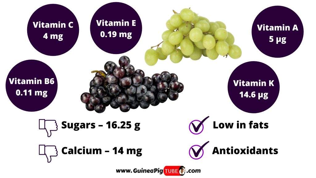 Nutrition Facts of Grapes for Guinea Pigs