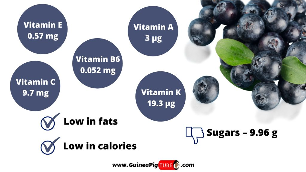 Nutrition Facts of Blueberries for Guinea Pigs