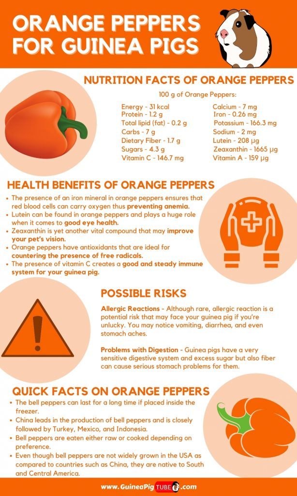 Can Guinea Pigs Eat Orange Peppers _1