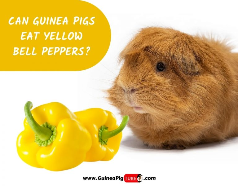 Can Guinea Pigs Eat Yellow Bell Peppers_