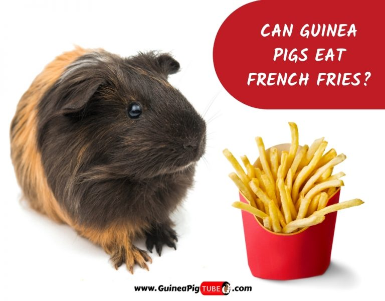 Can Guinea Pigs Eat French Fries_