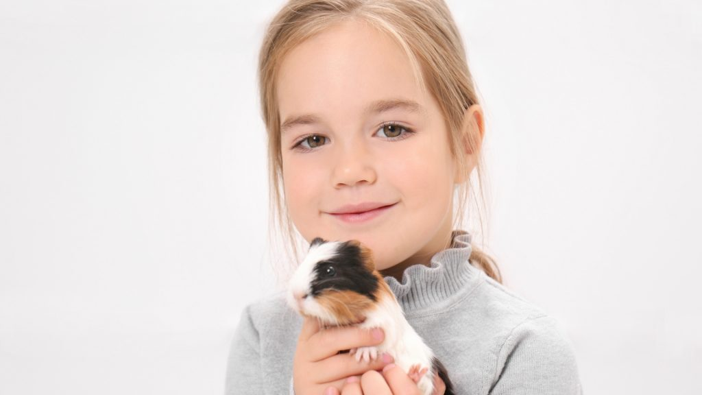 Guinea Pigs Are the Perfect Pets for Children