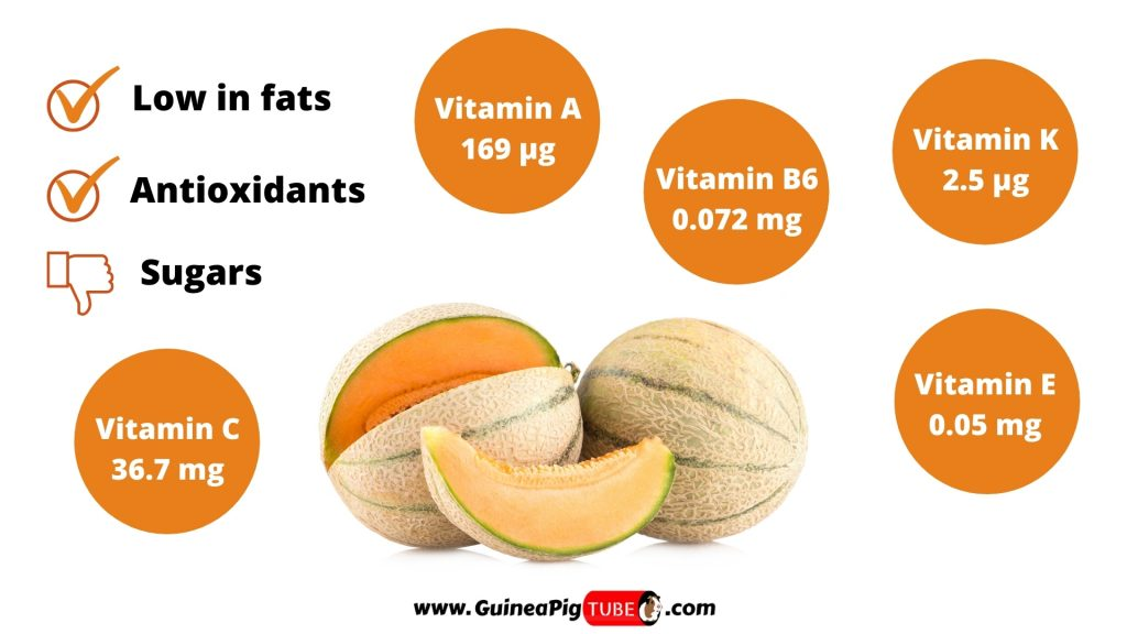 Nutrition Facts of Melons for Guinea Pigs