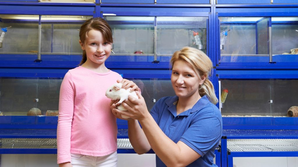 You Can Get a Guinea Pig at Your Local Shelter