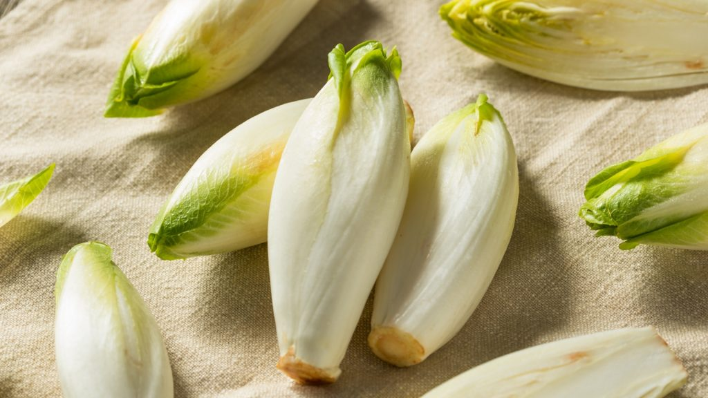 Can Guinea Pigs Eat Belgian Endive