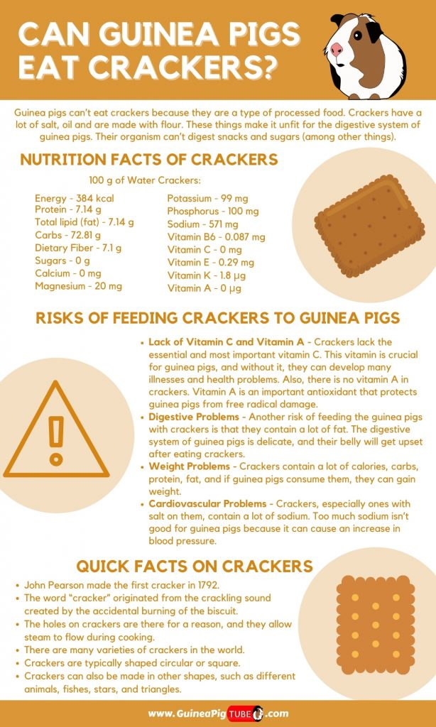 Can Guinea Pigs Eat Crackers_1