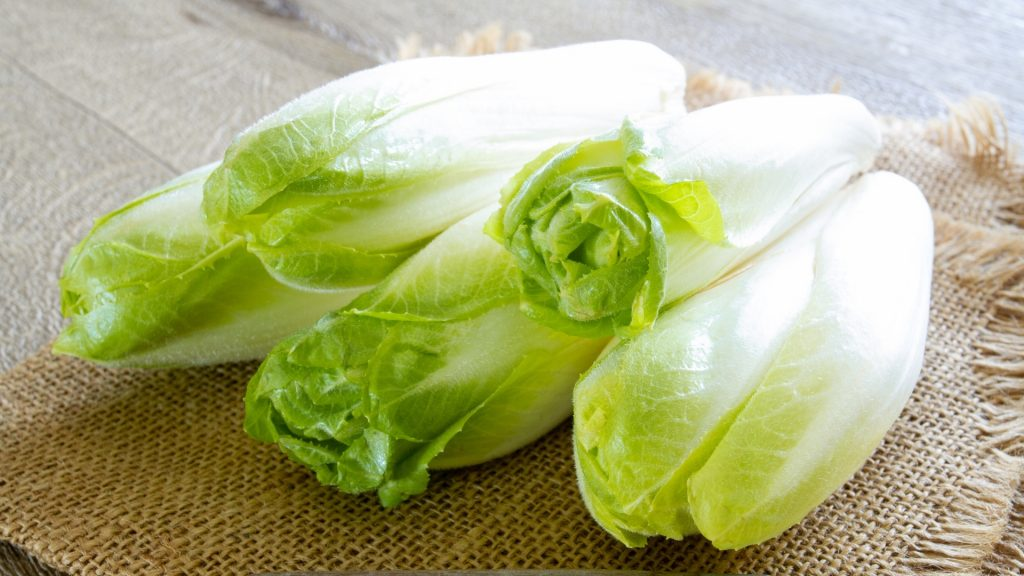 Is Endive Good for Guinea Pigs Health Benefits