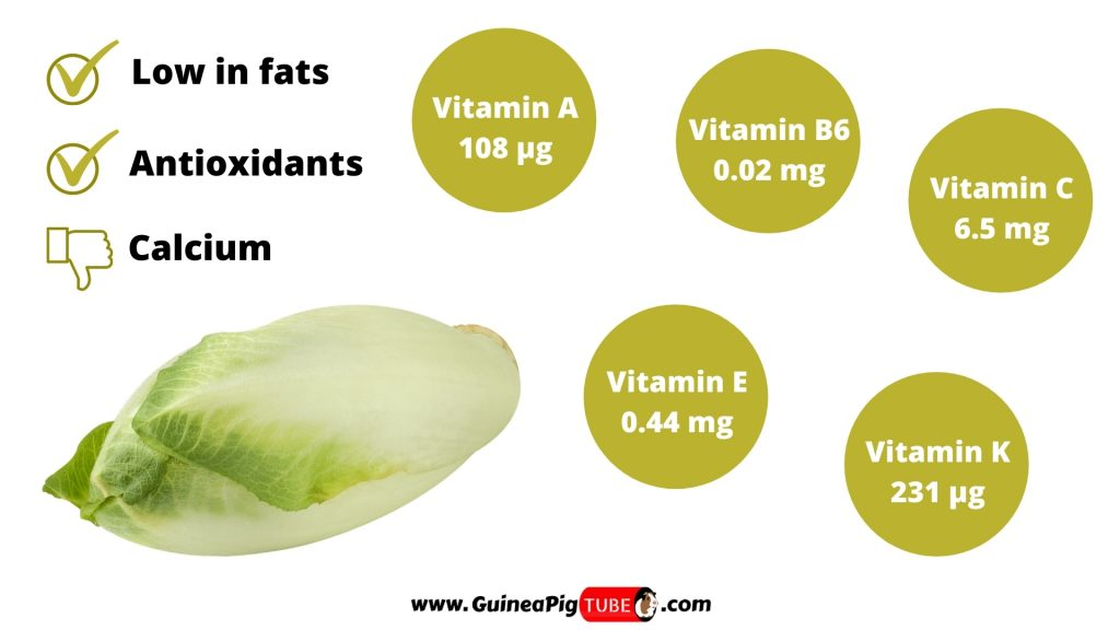 Nutrition Facts of Endive for Guinea Pigs