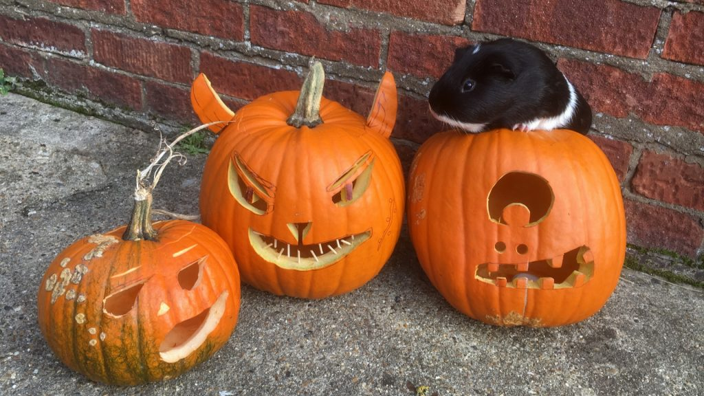 Risks to Consider When Feeding Pumpkin to Guinea Pigs