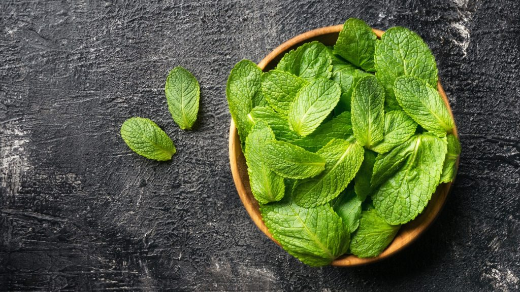 Serving Size and Frequency of Mint for Guinea Pigs