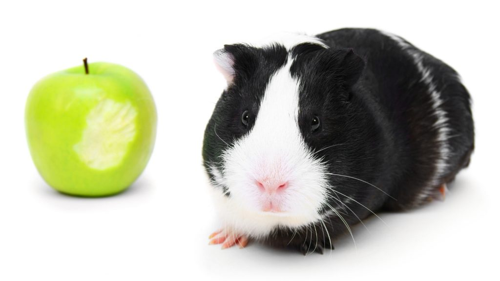 Can Guinea Pigs Eat Green Apple Skin