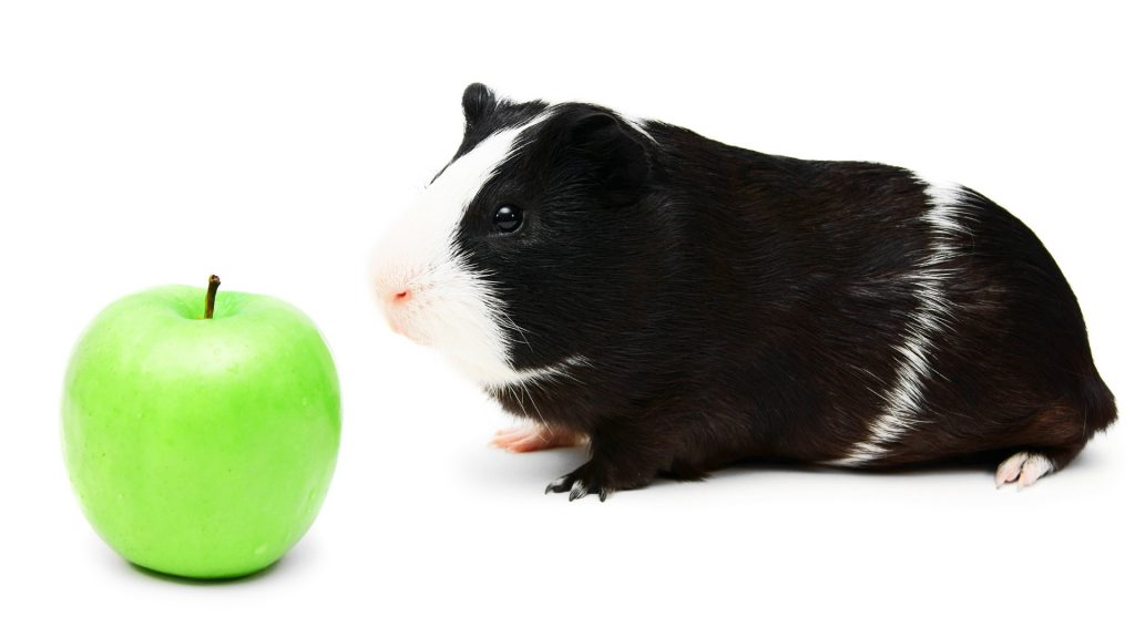 Can Guinea Pigs Eat an Entire Green Apple