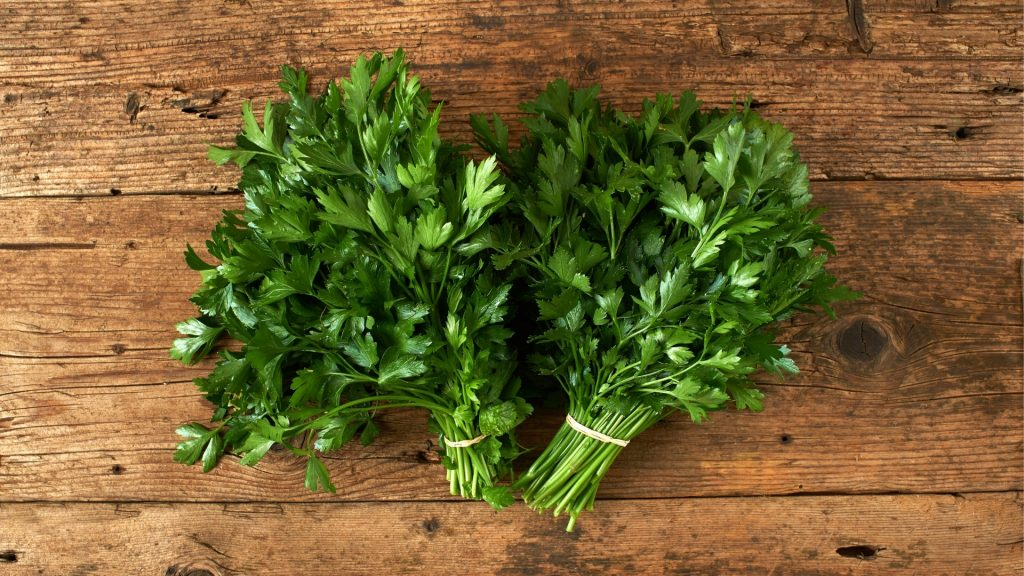 Health Benefits of Parsley for Guinea Pigs
