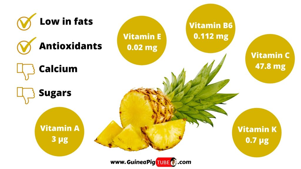 Nutrition Facts of Pineapple for Guinea Pigs