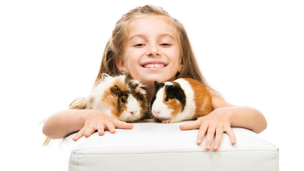 Best Guinea Pigs for Kids