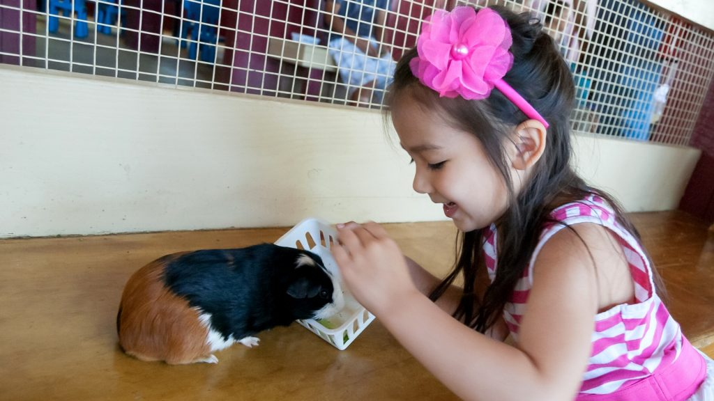 Children Can Have Fun Creating Toys for Guinea Pigs and Decorating Their Cage