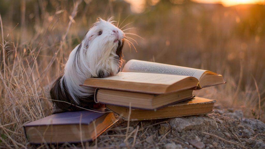 Guinea Pig Books for Kids