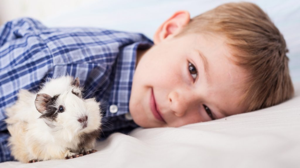Guinea Pigs Are Gentle and Entertaining Animals
