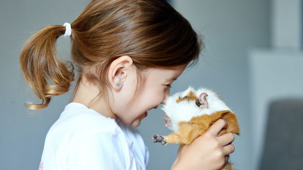 Guinea Pigs Get Attached to People